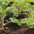 The future of organic food in the world